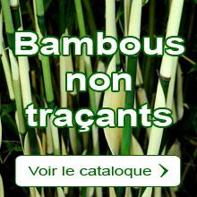 Bambous cespiteux - Bambous non traçants