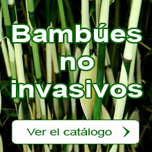 Bambúes no invasivos