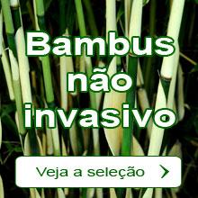 Bambus não invasivo