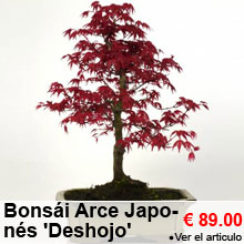 Bonsái Arce Japonés 'Deshojo' 8 años - 89.00 €