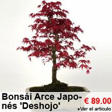 Bonsái Arce Japonés 'Deshojo' 8 años - 89.00 €
