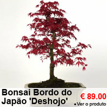 Bonsai Bordo do Japão 'Deshojo' 8 anos - 89.00 €