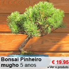 Bonsai Pinheiro mugho 5 anos - 19.95 €