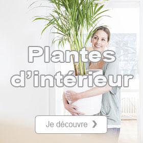 Boutique plantes d'intérieur