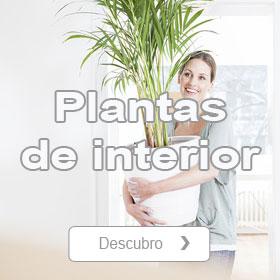 Tienda de Plantas de interior