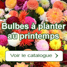 Bulbes à planter au printemps