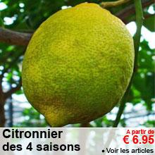 Citronnier des 4 saisons - a partir de 6.95 €