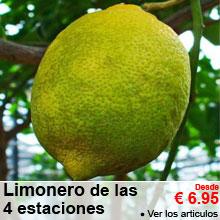 Limonero de las 4 estaciones - A partir de 6.95 €
