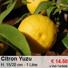 Citron Yuzu - 14.50 €