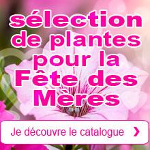 Fête des Mères: Notre sélection de plantes