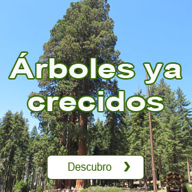 Catálogo de Árboles ya Crecidos