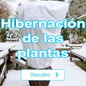 Hibernación de las plantas