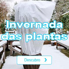 Invernada das plantas