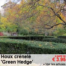 Houx crénelé 'Green Hedge' - a partir de 3.95 €