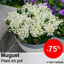 Prix tous doux sur le Muguet -75%