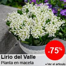 Precios muy suaves sobre el Lirio del valle -75%