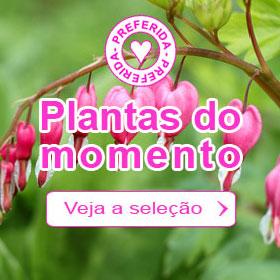 Plantas do momento