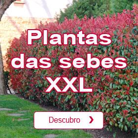 Plantas altas para sebes