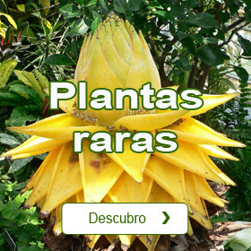 Plantas raras