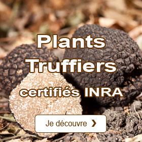 Plants truffiers certifiés INRA