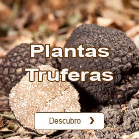 Plantas truferas