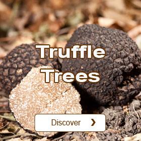 Truffle Trees