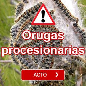 Orugas procesionarias - Eco-trampa Corteza