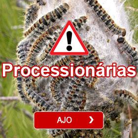 Processionárias - Armadilha ecológica Casca