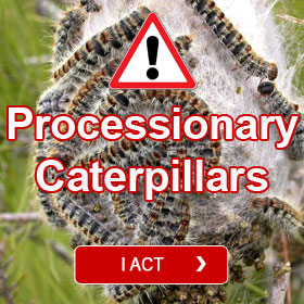Processionary Caterpillars - Eco-trap Bark