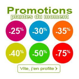 Promotions plantes du moment