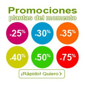 Promociones plantas del momento
