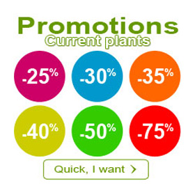 current plants promotions