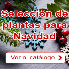 Navidad: Nuestra selección de plantas