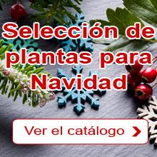 Navidad: Nuestra selección de plantas