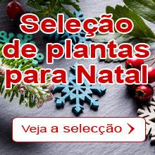 Natal : A nossa seleção de plantas