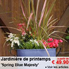 Jardinière de printemps 'Spring Blue Majesty' - a partir de 49.90 €