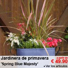 Jardinera de primavera 'Spring Blue Majesty' - a partir de 49.90 €