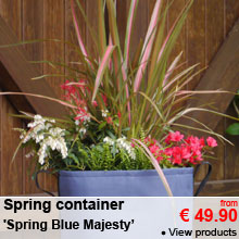 Spring Container 'Spring Blue Majesty' - from 49.90 €