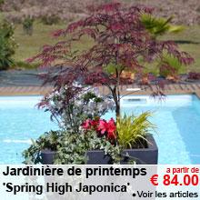 Jardinière de printemps 'Spring High Japonica' - a partir de 84.00 €