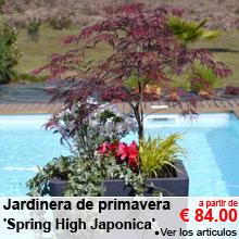 Jardinera de primavera 'Spring High Japonica' - a partir de 84.00 €