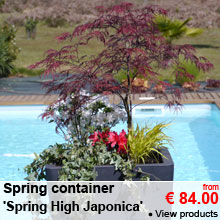 Spring container 'Spring High Japonica' - from 84.00 €