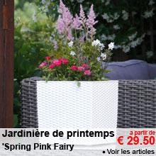 Jardinière de printemps 'Spring Pink Fairy' - a partir de 29.50 €
