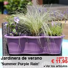 Jardinera de verano 'Summer Purple Rain' - a partir de 11.95 €