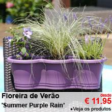 Floreira de Verão 'Summer Purple Rain' - desde 11.95 €
