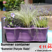 Summer container 'Summer Purple Rain' - from 11.95 €