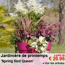 Jardinière de printemps 'Spring Red Cherry' - a partir de 20.95 €