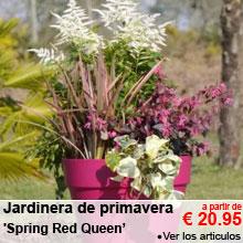 Jardinera de primavera 'Spring Red Cherry' - a partir de 20.95 €