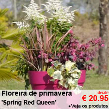 Floreira de primavera 'Spring Red Cherry' - desde 20.95 €
