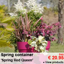 Spring Container 'Spring Red Cherry' - from 20.95 €