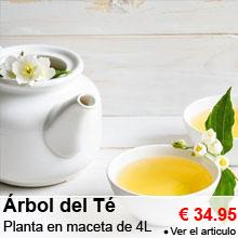 �rbol del T� - Planta en maceta de 4 litros - 34.95 €